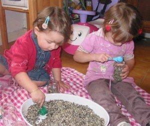 Petits Pots de Graines dans Aimer et découvrir la nature 11mars12-026-300x253
