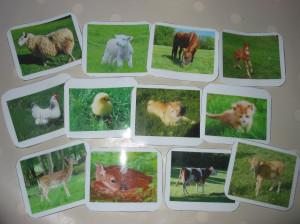Bébés animaux dans Aimer et découvrir la nature bébésanimaux-003-300x224