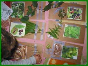 Herbier facile et rapide dans Aimer et découvrir la nature montage22-300x225