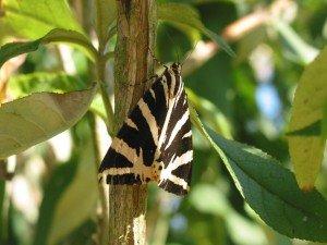 Photos d'insectes dans Aimer et découvrir la nature 17aout12-095-300x225