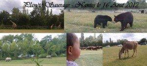 montage-animaux-300x135