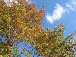 Un sympathique picnic d'automne dans A table !!!! 29octobre12-068-300x225