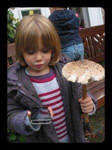 Un champignon géant dans A table !!!! coulemelles-005-225x300
