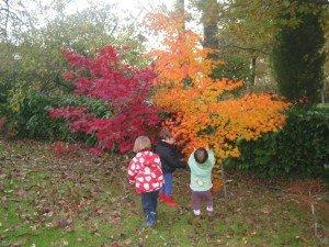 Les belles couleurs de l'automne dans Aimer et découvrir la nature 18novembre122-013-300x225