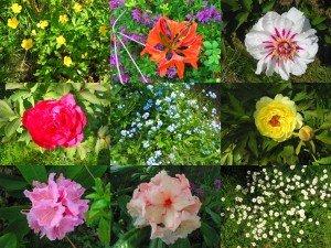 Dans notre jardin, il y a... dans La vie en rose montagefleurs-300x225