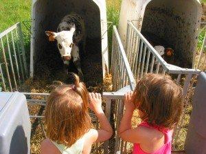 Un après midi à la ferme dans Aimer et découvrir la nature mont118-300x225
