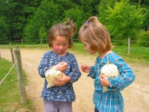 Pique Nique à Branféré dans Aimer et découvrir la nature mont71-300x225