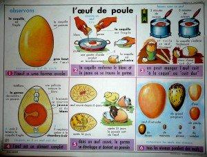 oeuf-de-poule-affiche-300x228