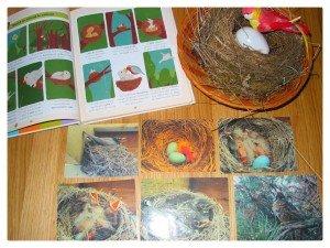Cycle de vie : l'oiseau, le poussin, le papillon, l'homme dans Apprendre en s'amusant oiseau-300x225