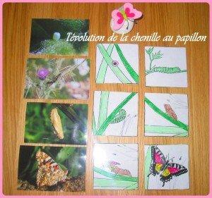 papillon-300x281