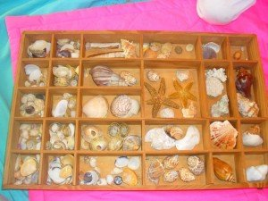 Notre collection de Coquillages dans Aimer et découvrir la nature coqui1-300x225
