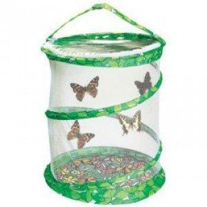 5 petites chenilles dans notre coin Nature dans Aimer et découvrir la nature kit_elevage_papillons_-_grand-z-300x300