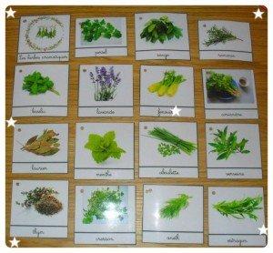 Cartes de Nomenclature sur les herbes aromatiques dans Activités et Boites sensorielles mont29-300x278