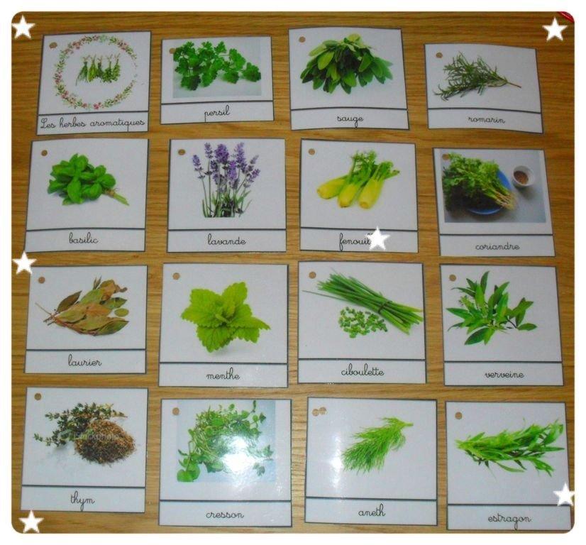 cartes de nomenclature sur les herbes aromatiques 183 croquelavieenrose