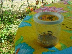 kit d'élevage de Papillon : journal de bord dans Aimer et découvrir la nature montage43-300x225