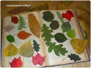 S'amuser avec des  feuilles séchées dans Aimer et découvrir la nature 1265531_224415181056029_920096292_o-300x225